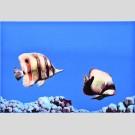 Atem - Monocolor Fish декор в ассортименте