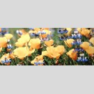 Atem - Yalta Flower декор