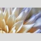 Golden Tile - Fiori И9Б331 декор - панно