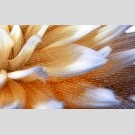Golden Tile - Fiori И9Б341 декор - панно